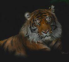 Majestic - Siberian Tiger by Concetta Kilmer