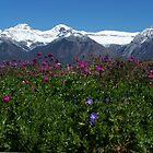 wild flowers abound by vernonite