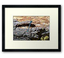 a very blue dragon fly Framed Print