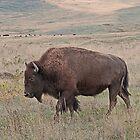 Bison #130 by Rodney55