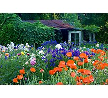 Garden Shed Photographic Print