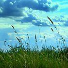 Prairie by Katie WIsniewski
