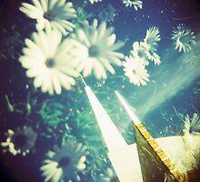 Daisies by RikkiB