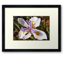 Diagonal iris Framed Print