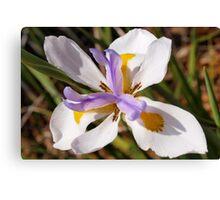 Diagonal iris Canvas Print