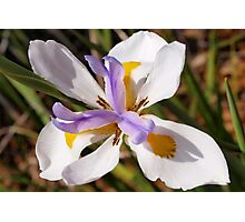 Diagonal iris Photographic Print