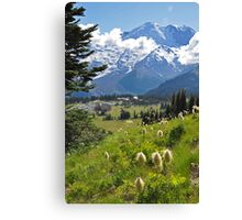 Mt. Rainier Anemones in the Sun Canvas Print