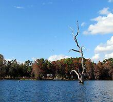 The Shore of Lake Rousseau by Judy Wanamaker