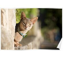 Mosman cat Poster