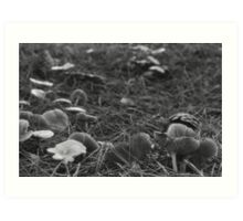 We're Off To See The Fungus... Art Print