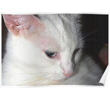 Unforgettable kitty Poster