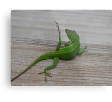 """""""Yoga Lizard"""" Metal Print"""
