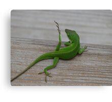 """Yoga Lizard"" Canvas Print"