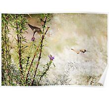 Hummingbird Garden Textured Poster