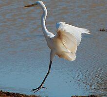 Crane Landing_Sri Lanka by Clive Reedman