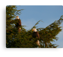 Two Bald Eagles  Canvas Print