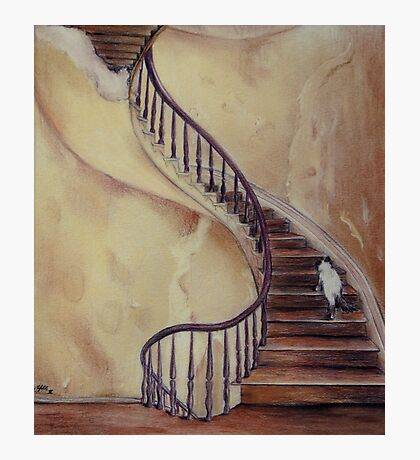 Cat on the Stairs Photographic Print