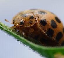 Lady Bug by Gabrielle  Lees