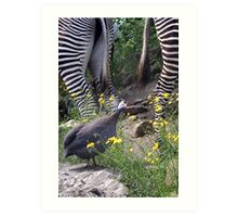 Lament of a guinea fowl Art Print
