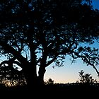 Fig tree silhouette at dawn by Daniel Pertovt