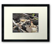 Sunshine Coast beach Framed Print