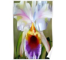 Orchid Cattleya Poster