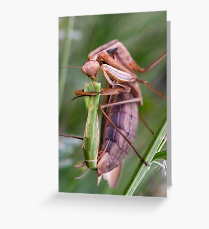 Headless mating mantis Greeting Card