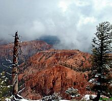 Bryce National Park by © Loree McComb