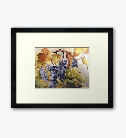 Villa Marie Vineyard Framed Print