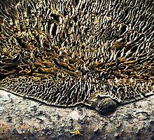 Dark side of the Moon - Turkeytail Fungus by Susana Weber