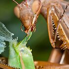 Headless mating mantis - detail by teva-art