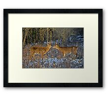 Why can't we be friends... Framed Print