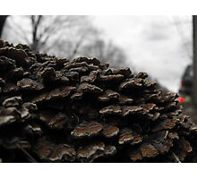 The fungus Photographic Print