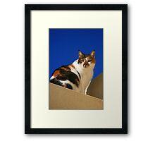Tortoise shell cat Framed Print