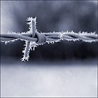 Frosted Barbed Wire by DaveTurner