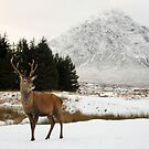 Deer &amp; Buachaille Etive Mr by Maria Gaellman