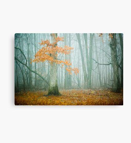 Oak in Fog Canvas Print