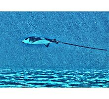 Eagle Ray Photographic Print
