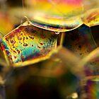 A Rainbow in Macro Land by BobbiFox