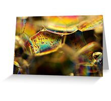 A Rainbow in Macro Land Greeting Card
