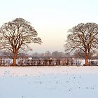 Twin Trees by AnnDixon