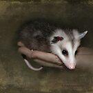 An Opossum Child by Kay Kempton Raade