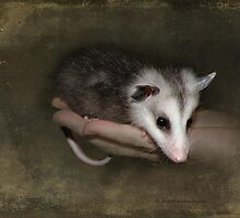 An Opossum Child by Kay Kempton Raade
