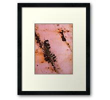 Nothing but a Hound Dog Framed Print