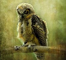 Young Great-Horned Owl by Kay Kempton Raade