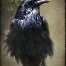 Raven Guard by kayzsqrlz
