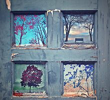 Old Doorways by Tara  Turner