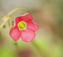 Flower Series 1 by Terrie Taylor