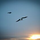 Seagulls Flying Towards the Sunset by Tristan Hopkins