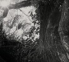 Host Tree by njordphoto